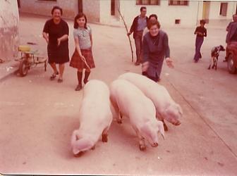 los cerdos se criaban en las casas de los pueblos turolenses - Don Jate S.A. tradición del matacerdo