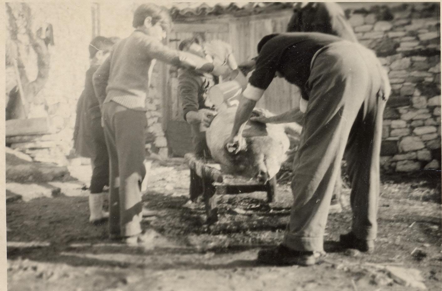 matanza del cerdo en Alfambra (Teruel)